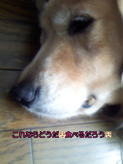 Image009~06