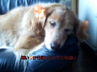 Image066~02