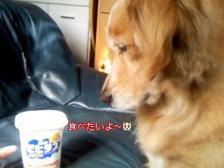 Image033_20100507221734.jpg