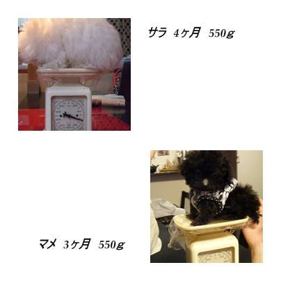 cats1_20091011172941.jpg