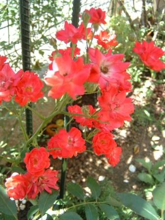fairyqueen10-3_20100721014250.jpg