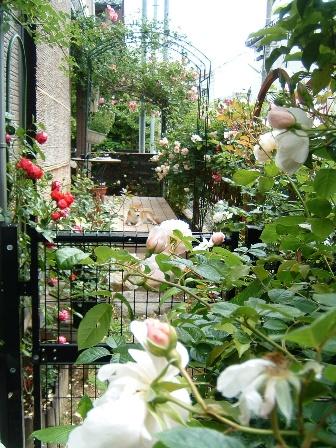 garden10-1.jpg
