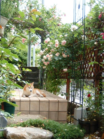 garden10-2.jpg