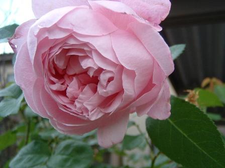 mary-rose09-4.jpg