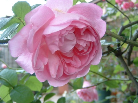 mary-rose10-14.jpg