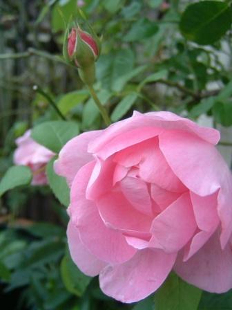mary-rose10-15.jpg