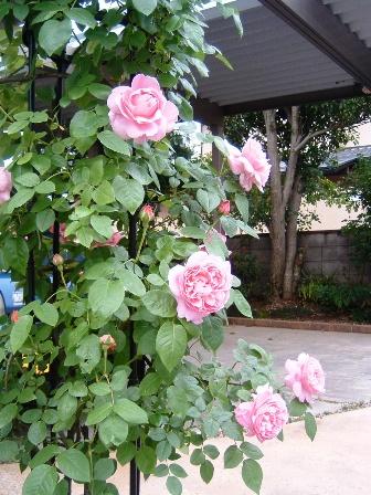 mary-rose10-2.jpg