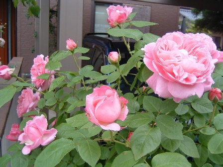 mary-rose10-3.jpg