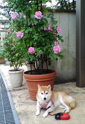 mary-rose10-4.jpg