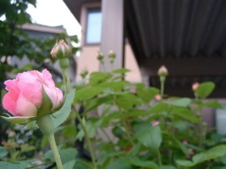 mary-rose10-5.jpg
