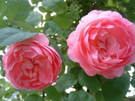 mary-rose10-6.jpg