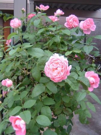 mary-rose10-7.jpg