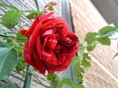 rouge09-3.jpg