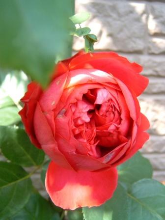 rouge10-5.jpg