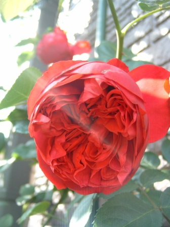 rouge10-6.jpg