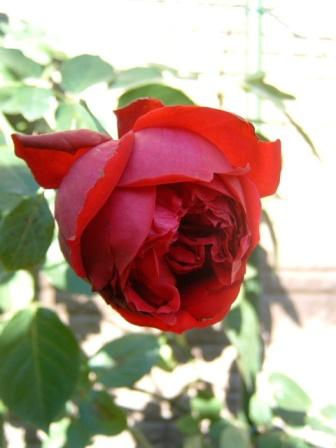 rouge10-8.jpg