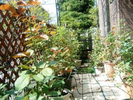 terrace10-2.jpg