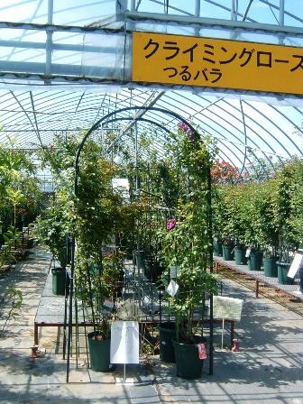 yoshioka10-2.jpg