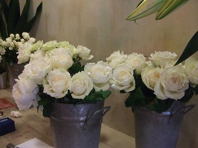 s-白薔薇