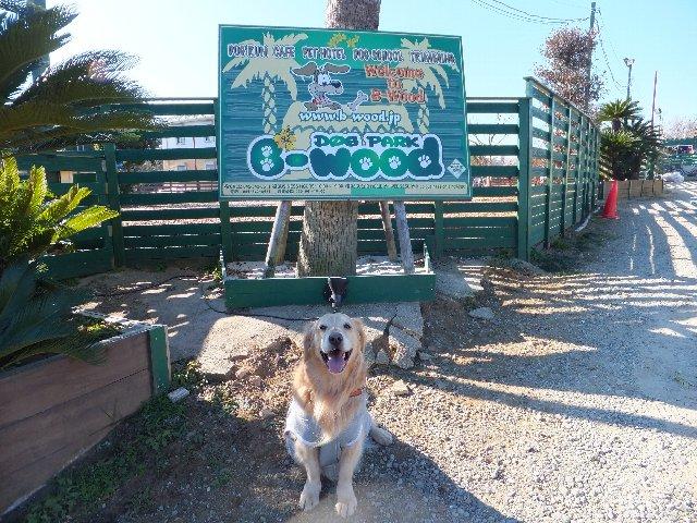 DOG PARK B-Wood