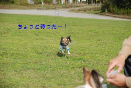 DSC_2613 ブログ