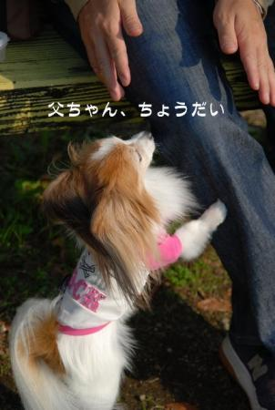 DSC_2701 ブログ