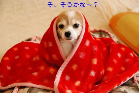 DSC_3241 ブログ