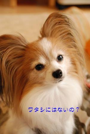 DSC_3231 ブログ