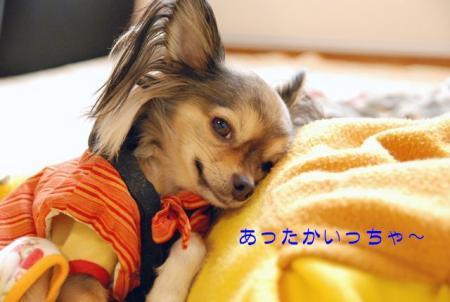 DSC_3204 ブログ