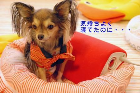 DSC_3244 ブログ