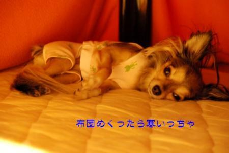 DSC_4094 ブログ