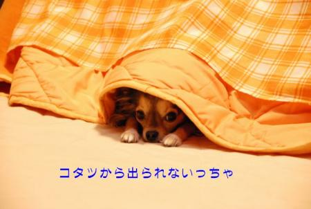 DSC_4278 ブログ