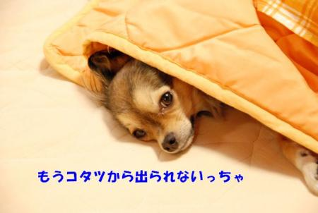 DSC_5074ブログ