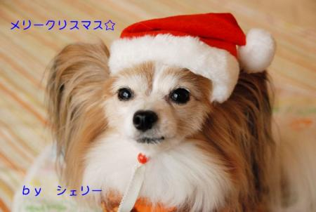 DSC_5737 ブログ