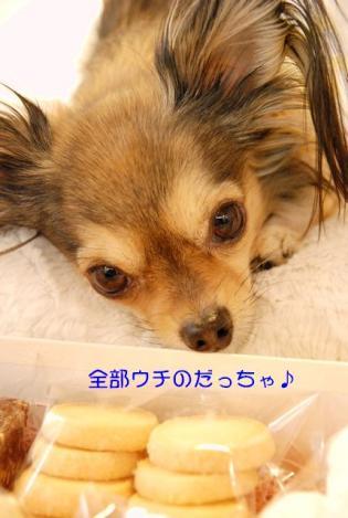 DSC_9352 ブログ