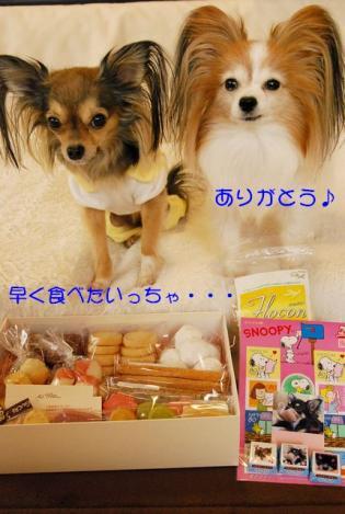 DSC_9308 ブログ