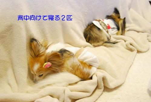 DSC_0291 ブログ