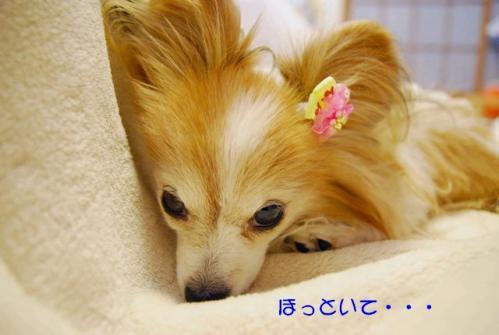 DSC_0300 ブログ