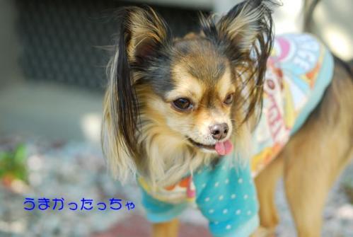 DSC_0537 ブログ