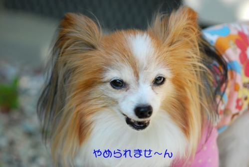 DSC_0526 ブログ