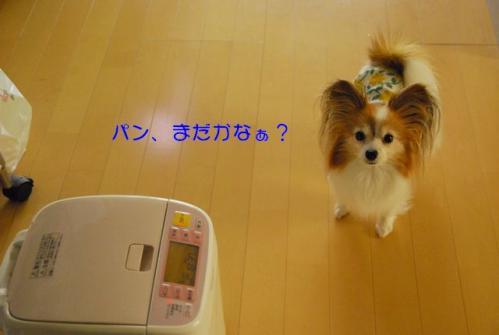 DSC_3100 ブログ
