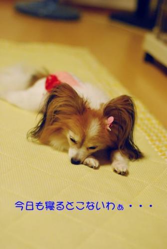 DSC_4241 ブログ