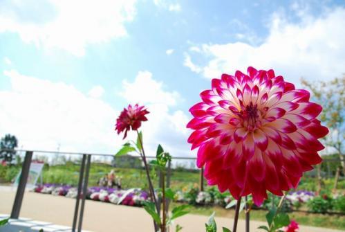 DSC_4731 ブログ
