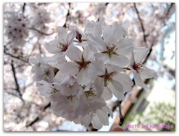 IMG_4376 ブログ