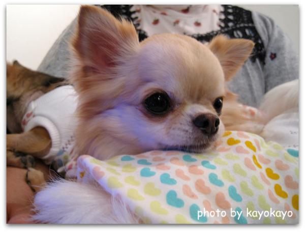 IMG_4466 ブログ