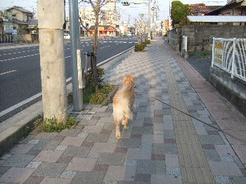 2011_04100001.jpg