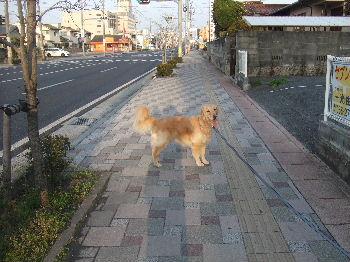 2011_04100002.jpg
