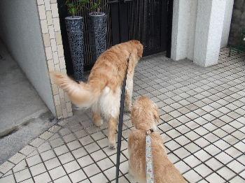 2011_06010006.jpg