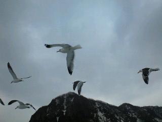 海鳥と一緒に。