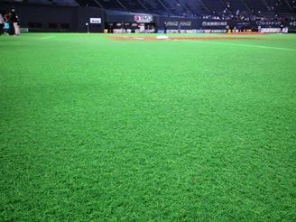 こんな芝です!